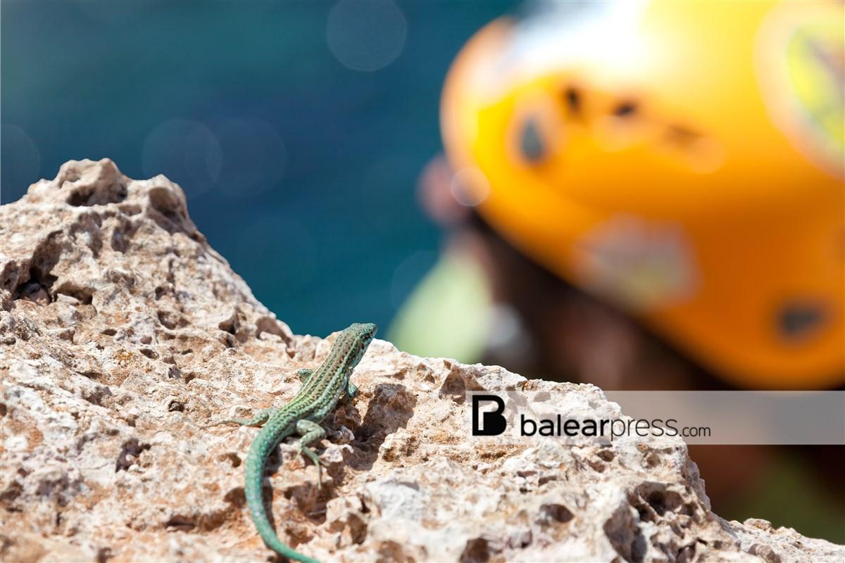 Klettern am Cap Barbaria, Formentera